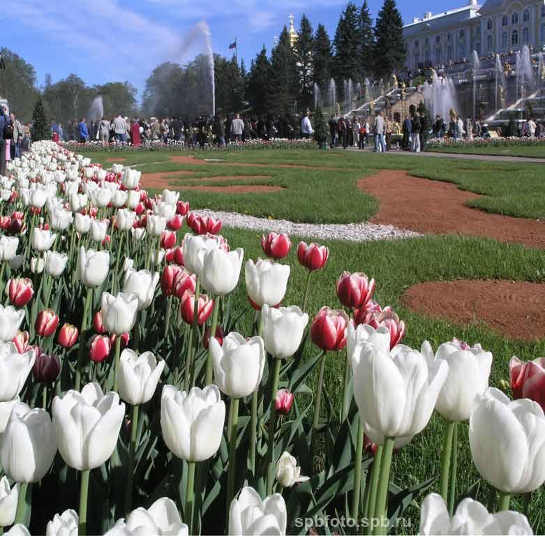 Весна в Петродворце. Петергоф (Петродворец). Фото Санкт ...: http://spbfoto.spb.ru/foto/details.php?image_id=410